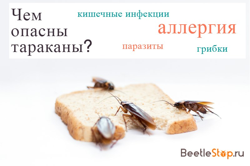 Какие опасные болезни переносят тараканы в квартире?