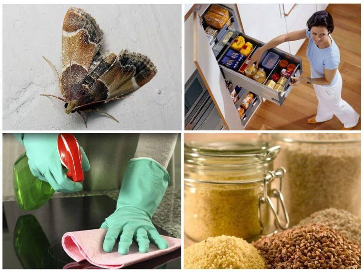 Как уничтожить личинок и избавиться от моли в квартире: эффективные и доступные варианты для выведения вредного насекомого