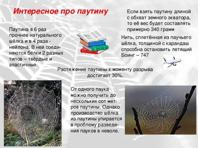 Зачем паукам паутина? - биология в вопросах и ответах