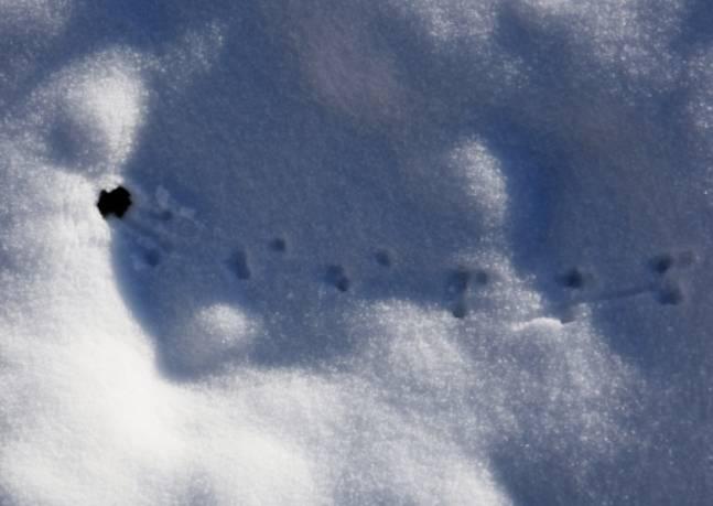 Следы на снегу | море творческих идей для детей