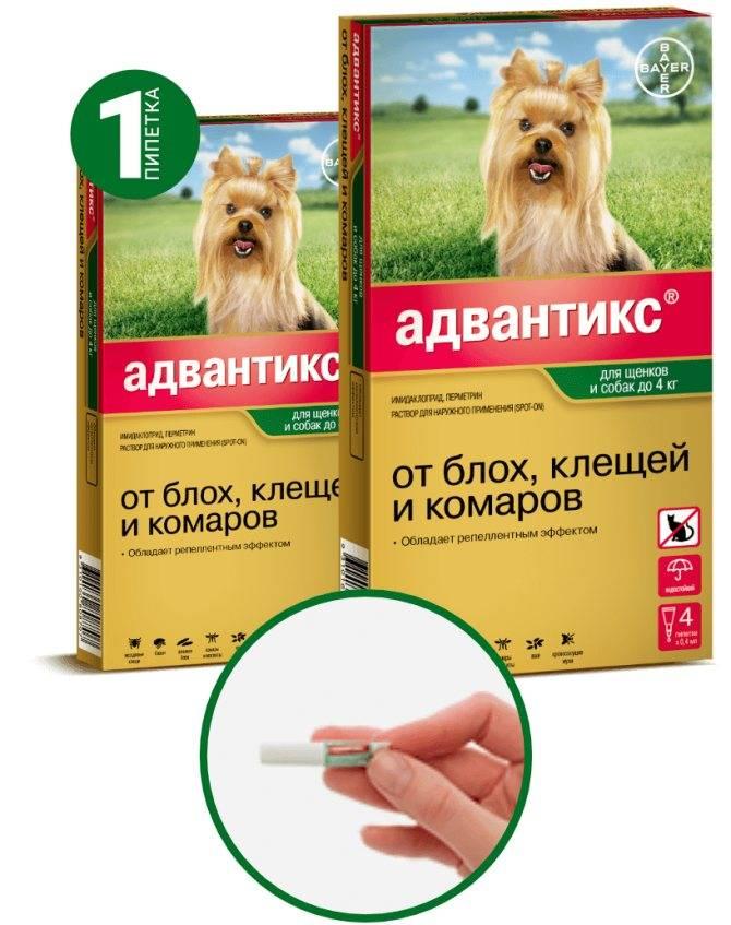Капли и другие средства от клещей для собак, какие лучше и удобнее использовать