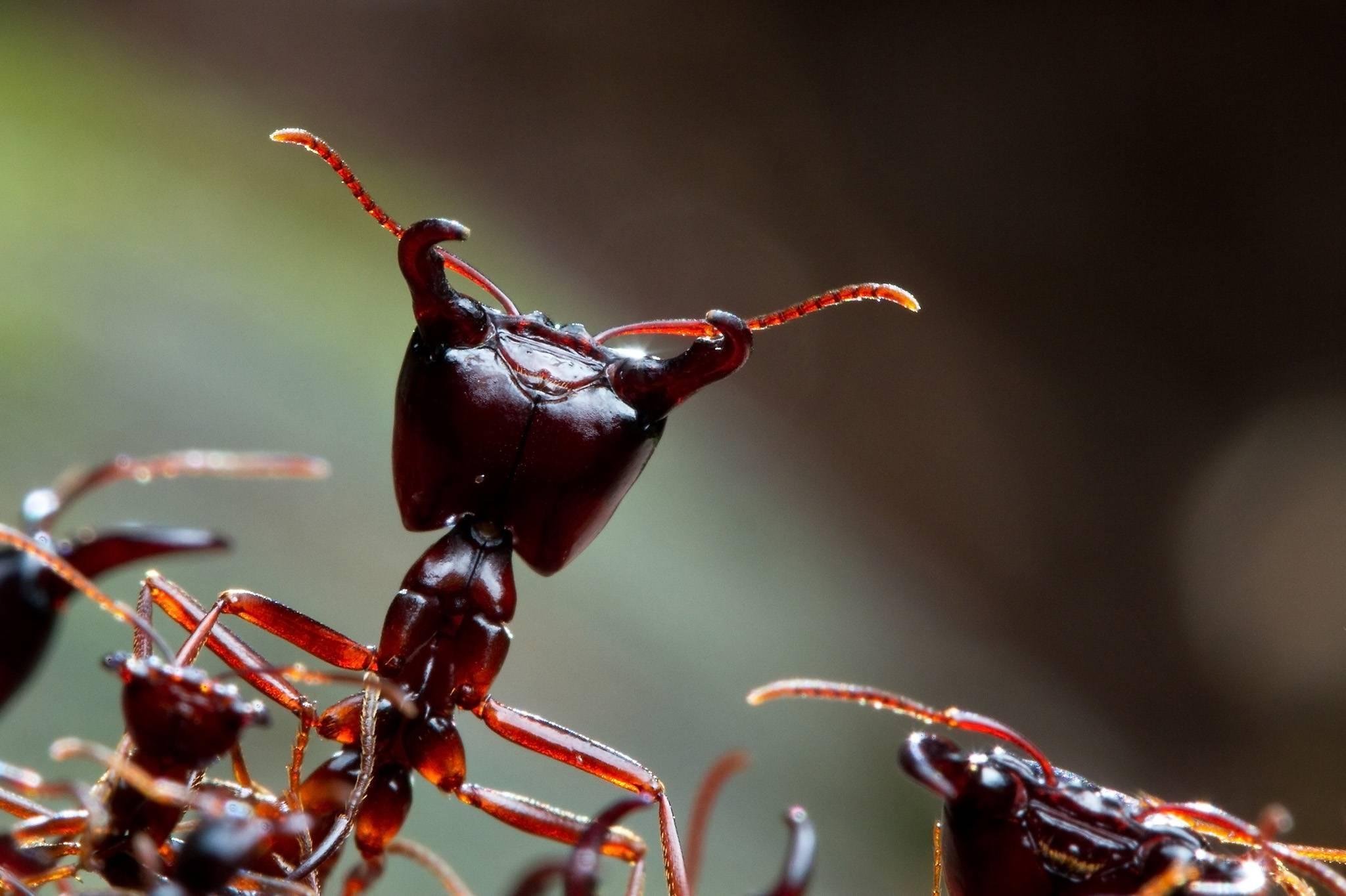 Особенности образа жизни муравьев и интересные факты о них