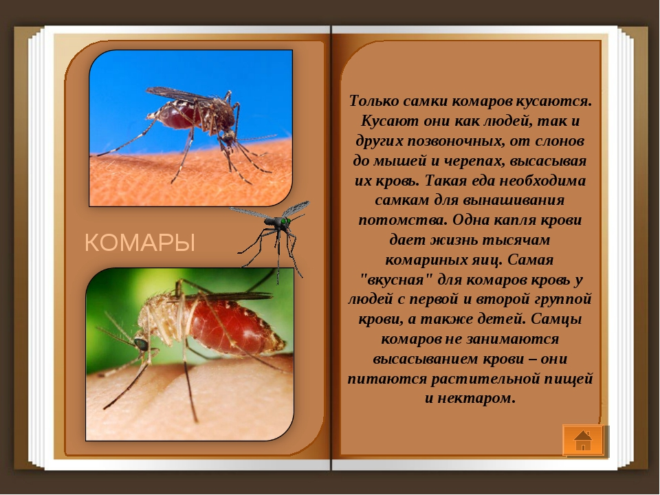 Какие люди больше всего привлекают комаров? причины, фото и видео  - «как и почему»