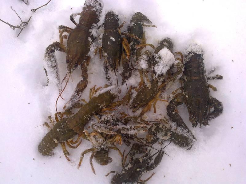 Где зимуют летучие мыши и как они это делают русский фермер
