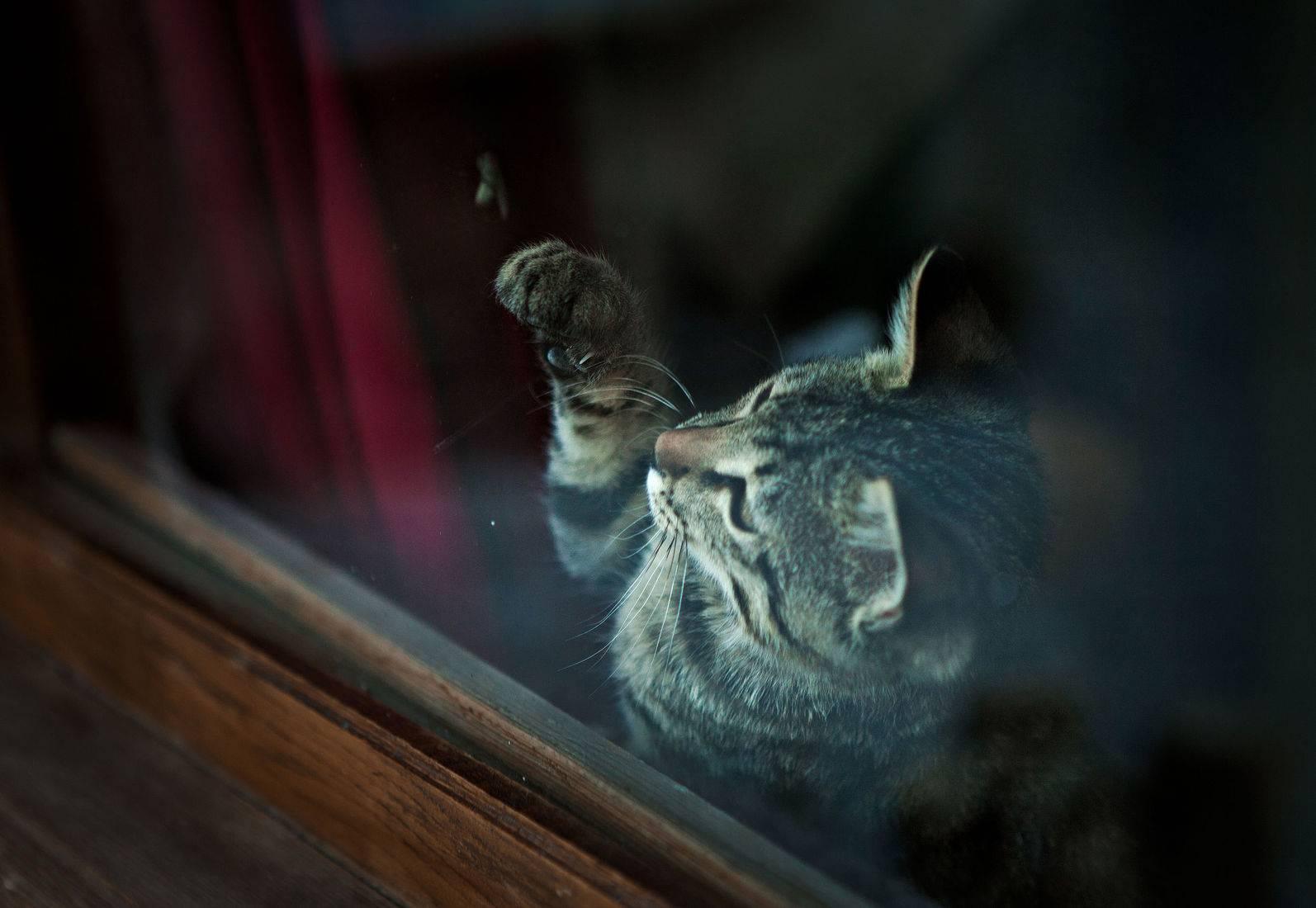Кот съел нитку: что делать хозяину, насколько опасно