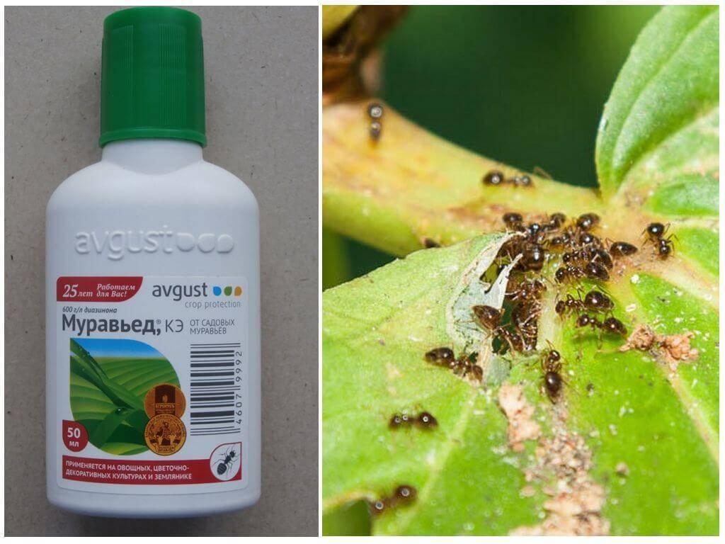 """Препарат """"мурацид"""" от муравьев: состав, инструкция по применению, отзывы"""