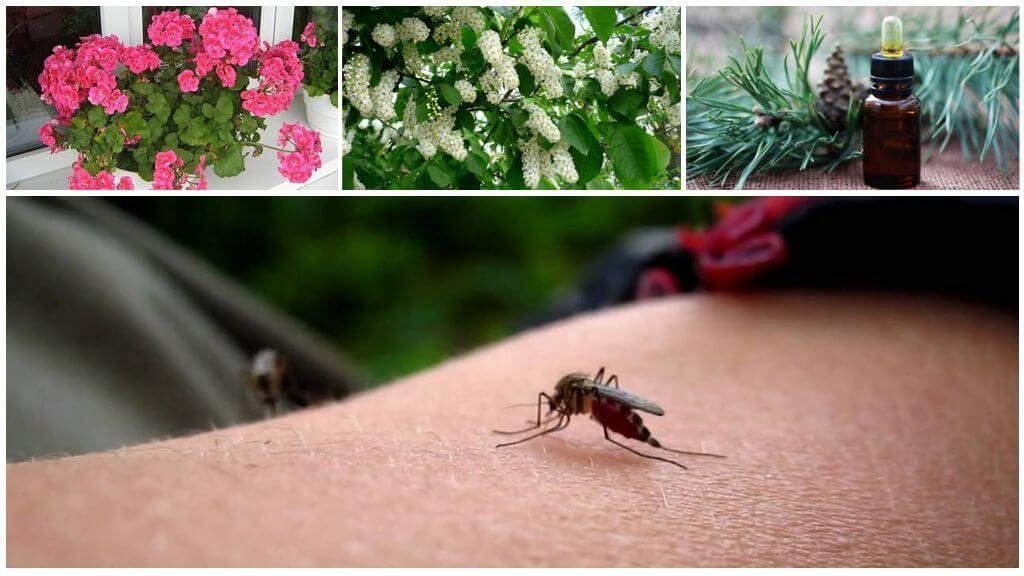 Что отпугивает комаров