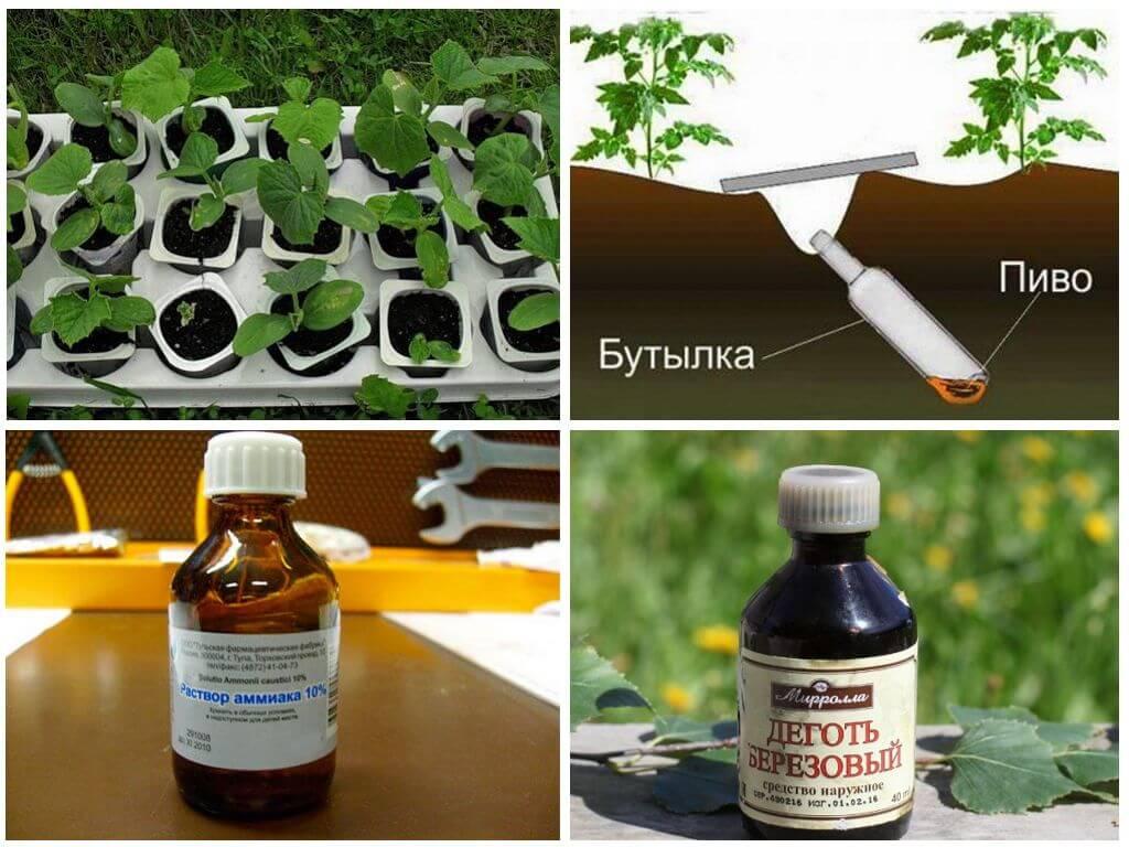 Березовый деготь — применение в саду и огороде. как использовать березовый деготь от вредителей