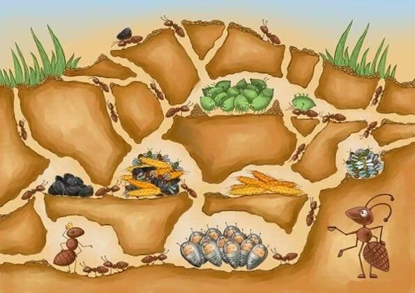 ✅ о борьбе с муравьями на пасеке, в ульях: как избавиться народными средствами - tehnomir32.ru