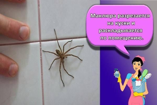 Пауки в квартире – что делать, можно ли убивать пауков в квартире?