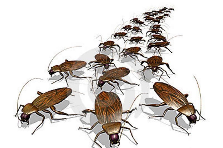 Как избавиться от тараканов в общежитии?