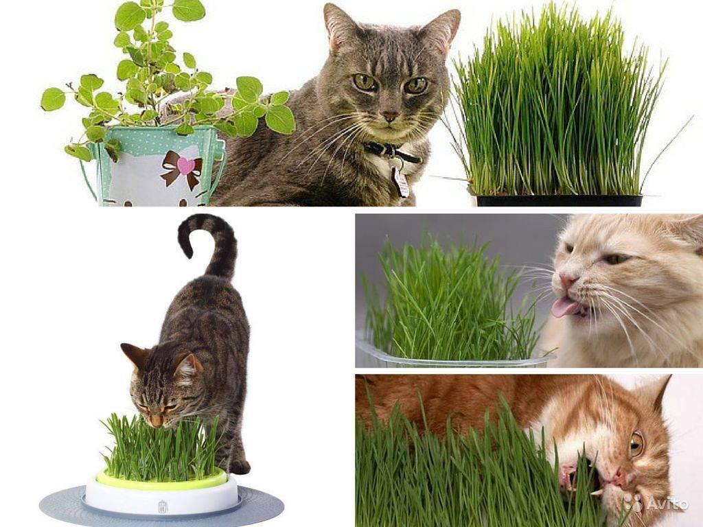 Какая трава отпугивает мышей