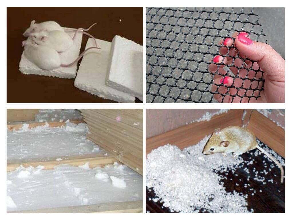 Едят ли мыши пенопласт: как обезопасить свой дом 2021