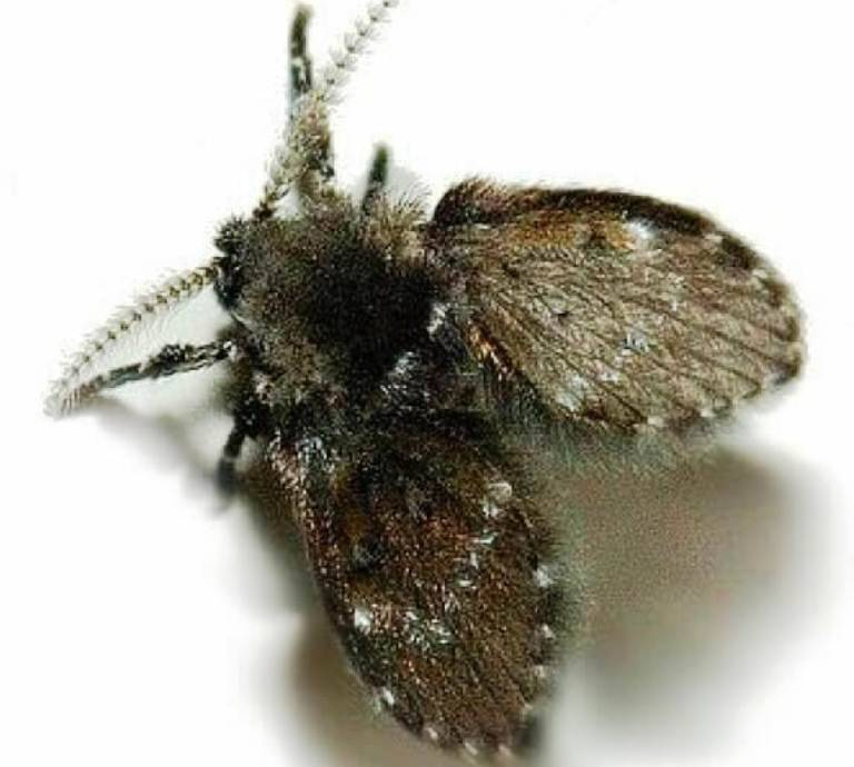 Как избавиться от луковой мухи дома? народными средствами!