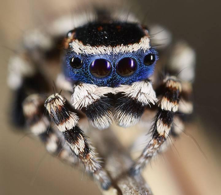 Самые удивительные и красивые пауки мира