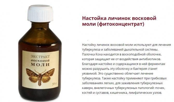 Пчелиная моль: настойка, применение, что лечит