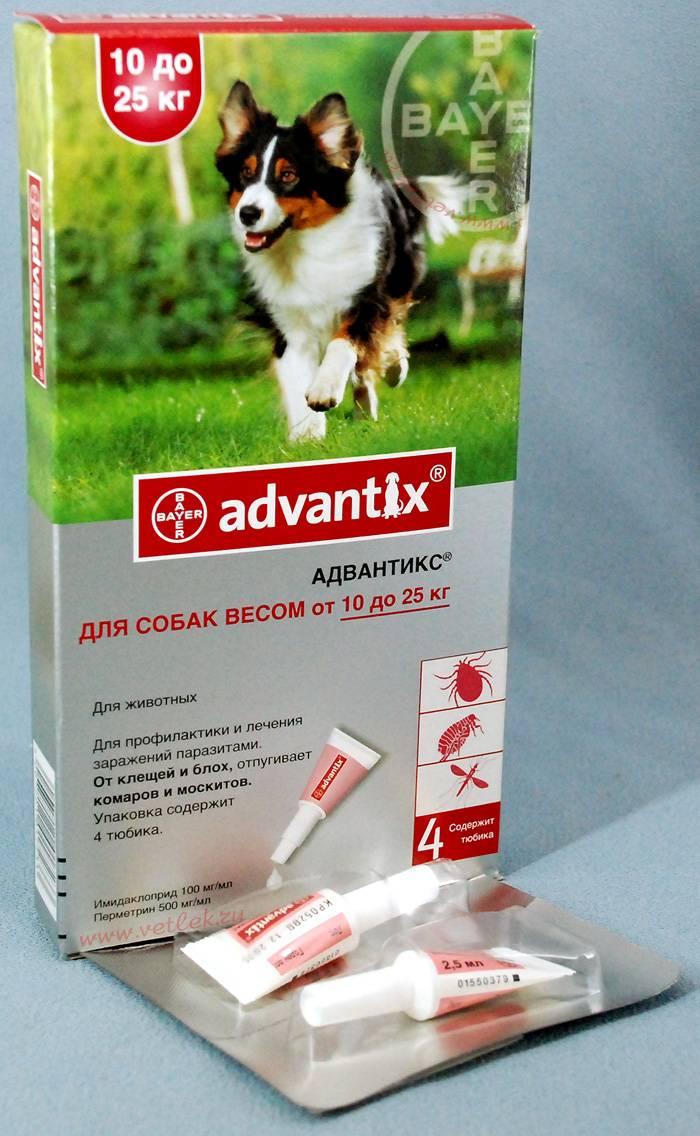 Адвантикс капли на холку для собак. дозы и способ применения