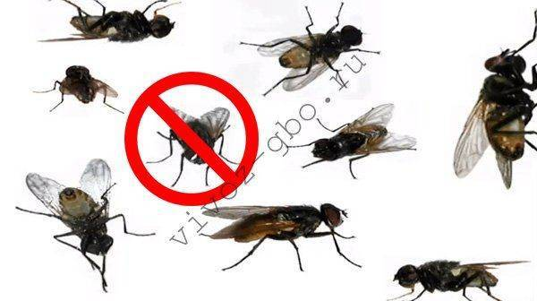 Туалетная муха: способы борьбы с ней — насекомые вредители