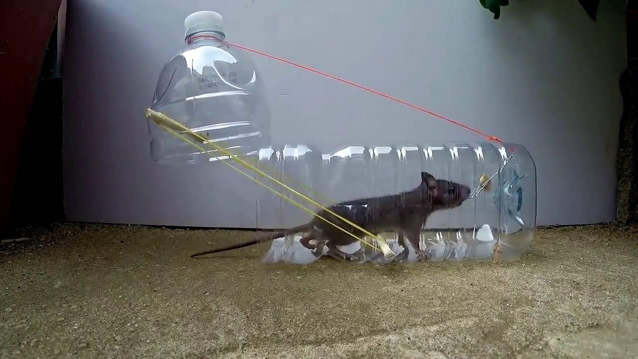 8 способов сделать мышеловку: эффективные ловушки для мышей своими руками в домашних условиях
