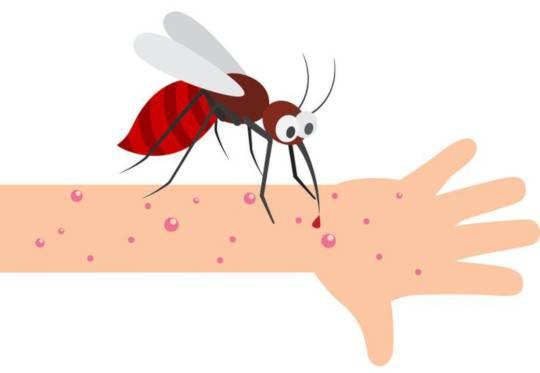 Укусы комара у собаки. что делать, если собаку покусали комары и мошки собаку покусали комары что делать