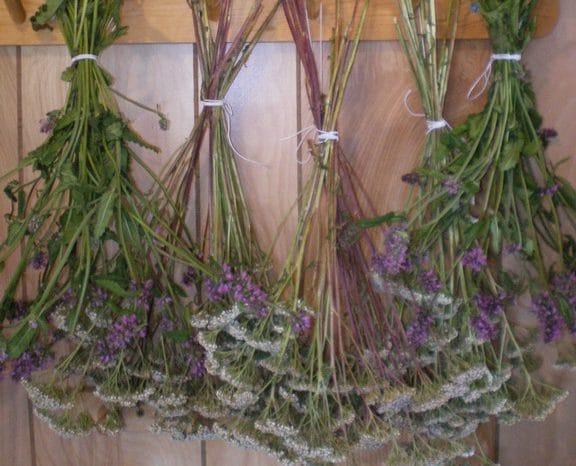 Чего боится моль и ее личинки - растения, масло, трава от моли
