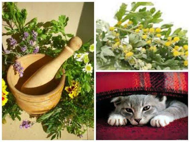 Обзор противоблошиных народных средств для кошки: способы их применения