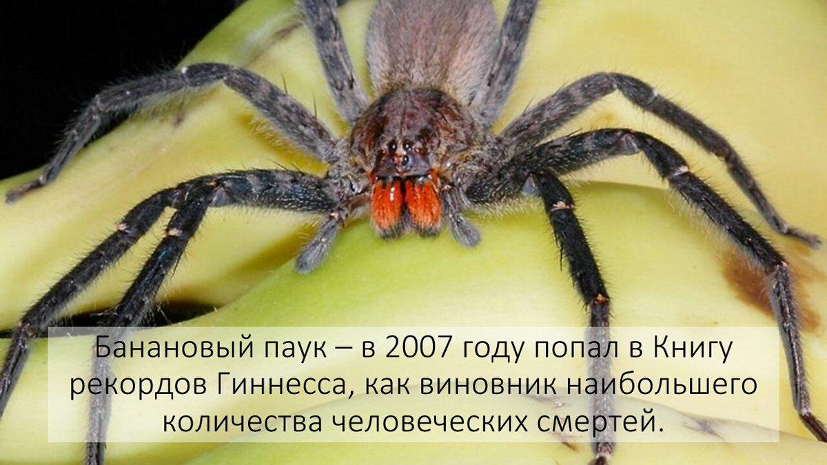 Топ-10 самых опасных пауков со всего мира