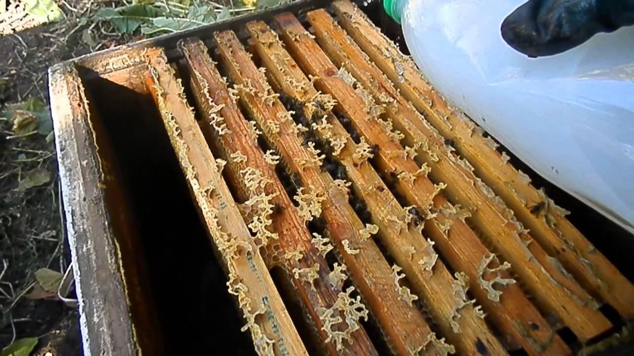 Обработка пчел бипином - инструкция