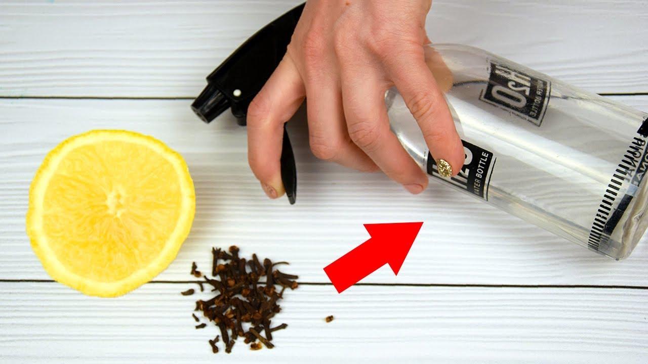 Как сделать домашнее средство от мошек и комаров своими руками - лучшие способы