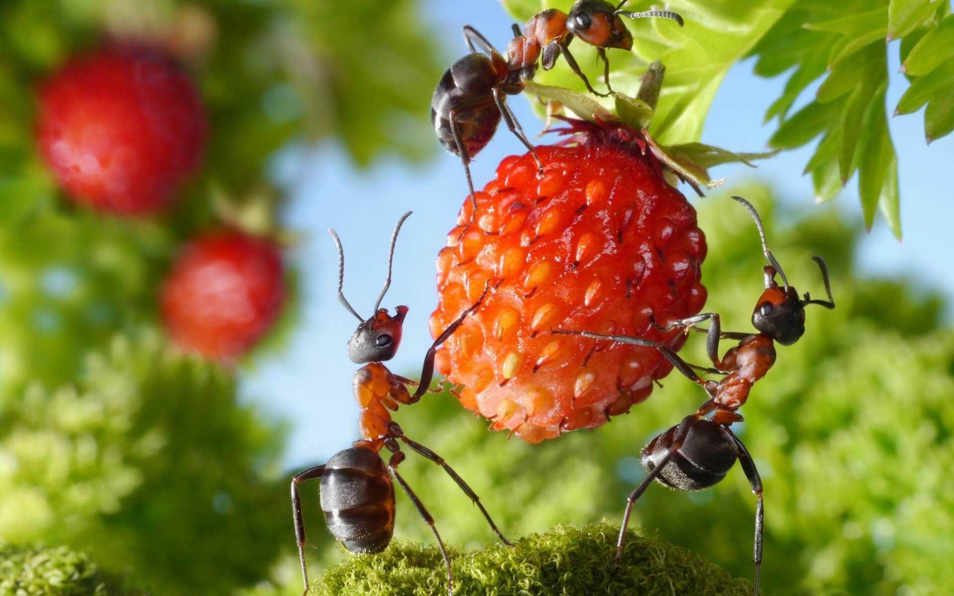 24 интересных факта о муравьях