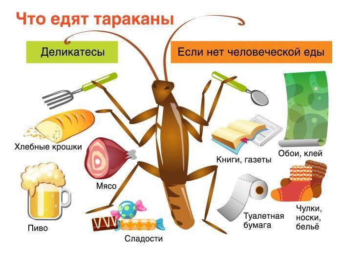 7 способов избавиться от черных тараканов: чем травить