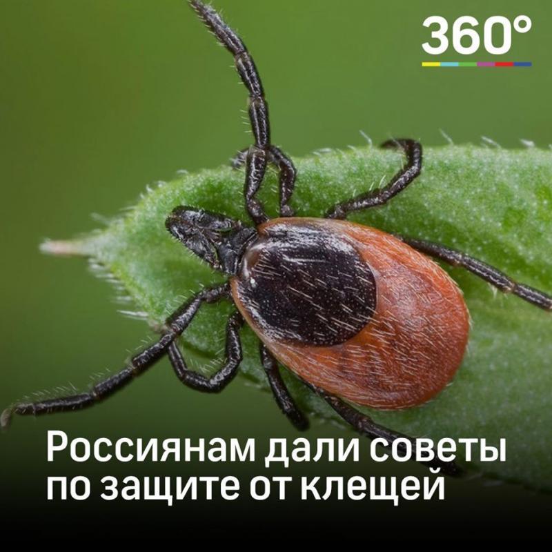 Клещи в сентябре, опасны или нет паразиты осенью