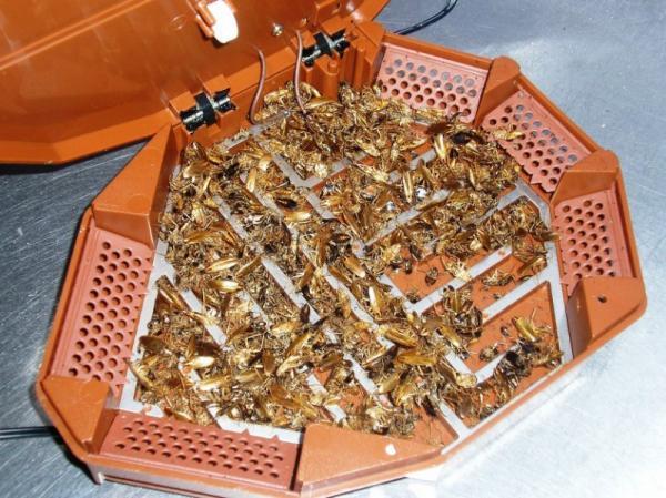 Ловушка для тараканов - самые простые эффективные правила удаления тараканов (125 фото)