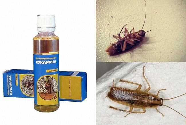 Кукарача таракан летает или средство, инструкция по применению
