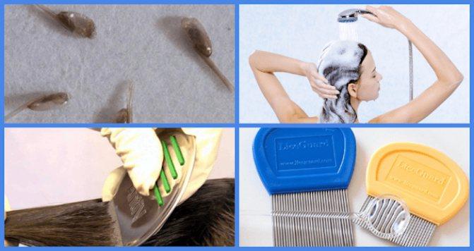 Чем обработать расческу после вшей: какие средства использовать и что делать с вычесанными гнидами при педикулезе?