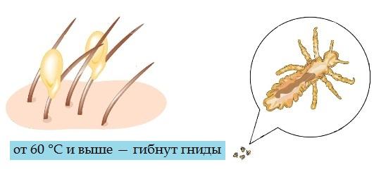 При какой температуре погибают вши и гнид: методы воздействия