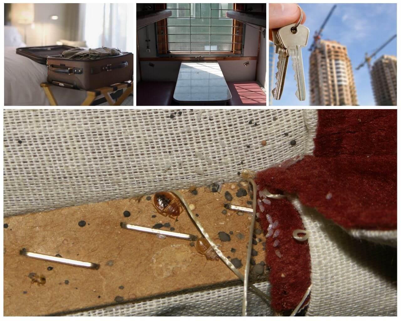 ❶ как найти и обнаружить постельных клопов в квартире и в доме самостоятельно и узнать есть ли клопы дома?