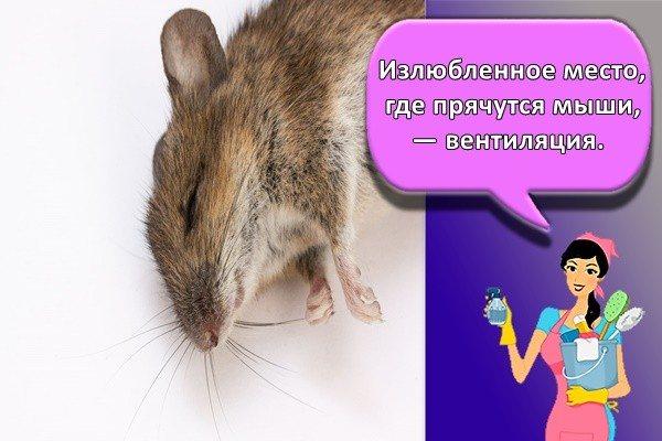 Запах домашних крыс: воняют ли декоративные питомцы, почему воняют и как сделать, чтобы резко не пахли самцы