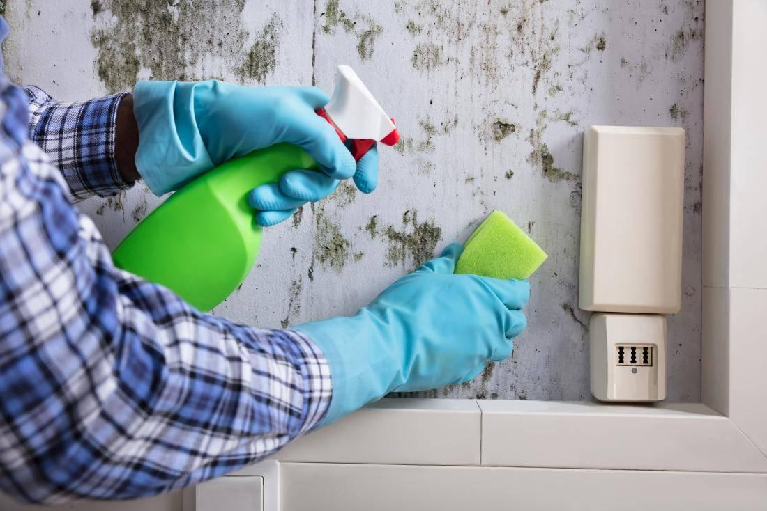 Как избавиться от плесени на стенах в квартире – причины появления и способы борьбы с грибком