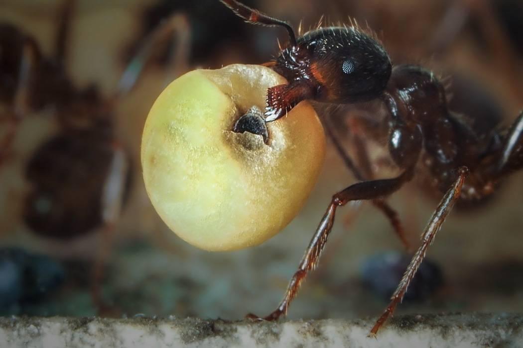 Чем питаются пчелы, что любят и чем кормят своих деток весной, летом, осенью и зимой