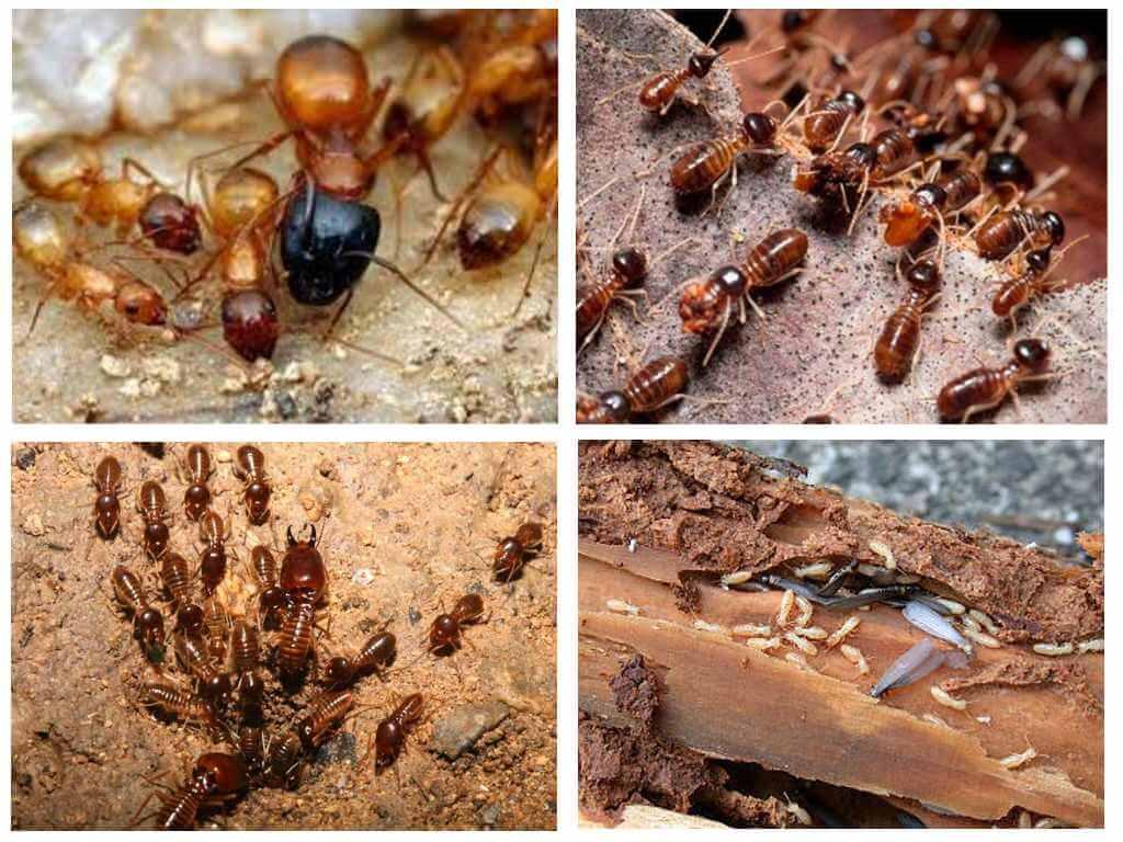 Термиты и их колония