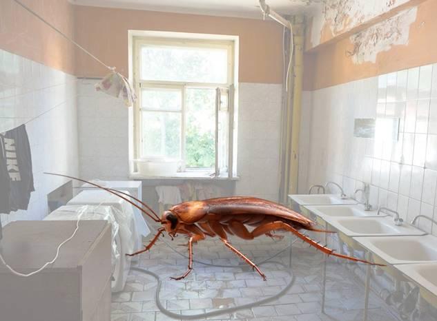 Как бороться и избавиться от тараканов в общежитии?