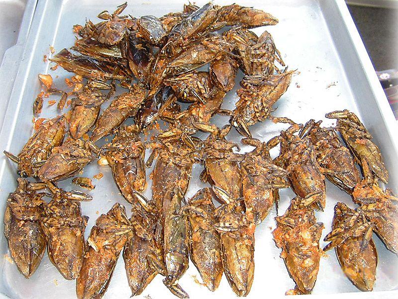 Какое насекомое самое вкусное? :)