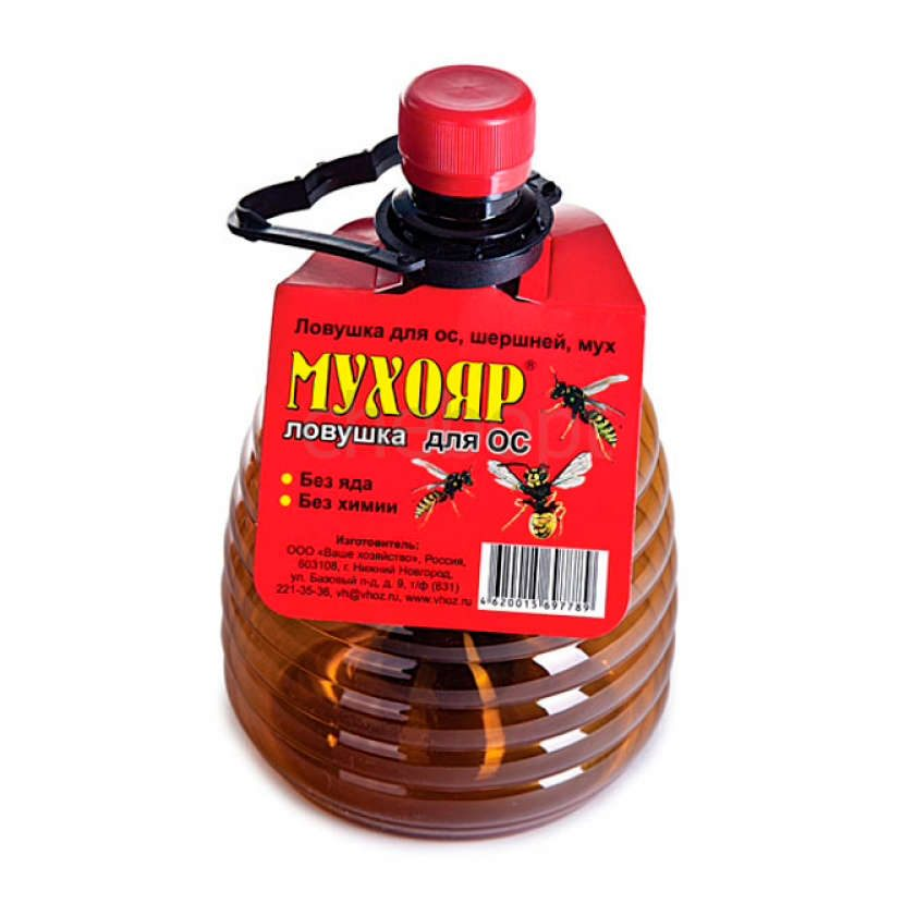 ✅ о шершнях: как от них избавиться в доме, как вывести шершней из стены дома - tehnomir32.ru