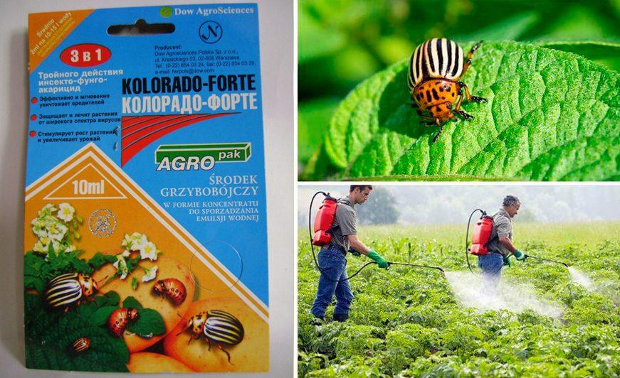 Как разводить «корадо» от колорадского жука: инструкция, отзывы
