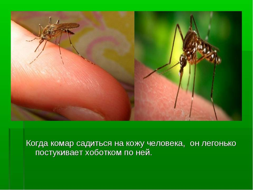 Проверенные средства против зуда от укуса комара