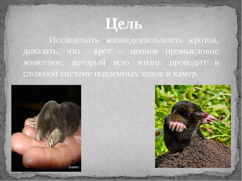 Баран: 125 фото, особенности, виды, общее описание, образ жизни и среда обитания