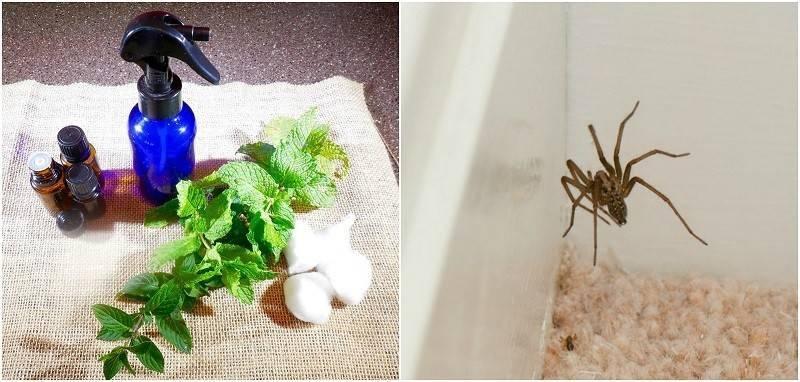 Как избавиться от черных пауков в доме?