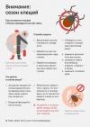 Клещевой энцефалит у собак: клинические проявления и методы терапии