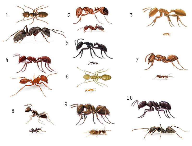 Социальная жизнь муравьев – как она устроена?